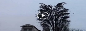 Huge bunch of birds leaving tree