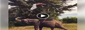 Gymnastic with Elephants
